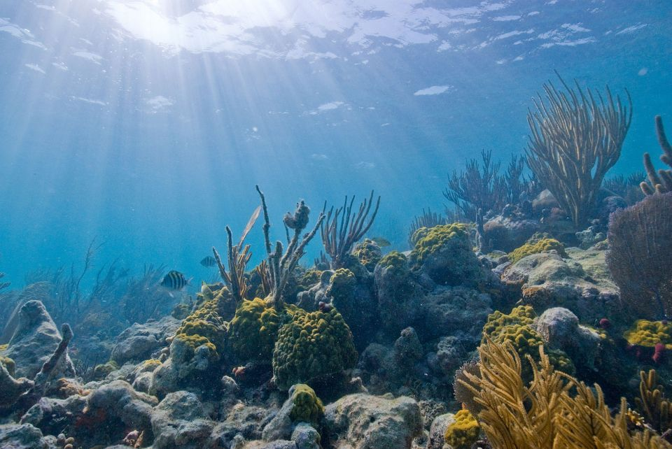 Underwater view in Biscayne National Park, Florida, USA